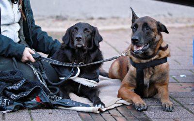 Wir gehen auf die Straße – tierärztliche Unterstützung für die Straßenhunde in Oldenburg