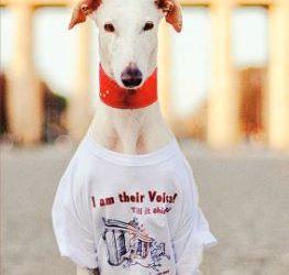 Demonstration: Marsch für Galgos und andere spanische Jagdhunde