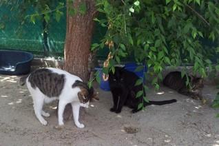 Katzenpopulation in Deutschland