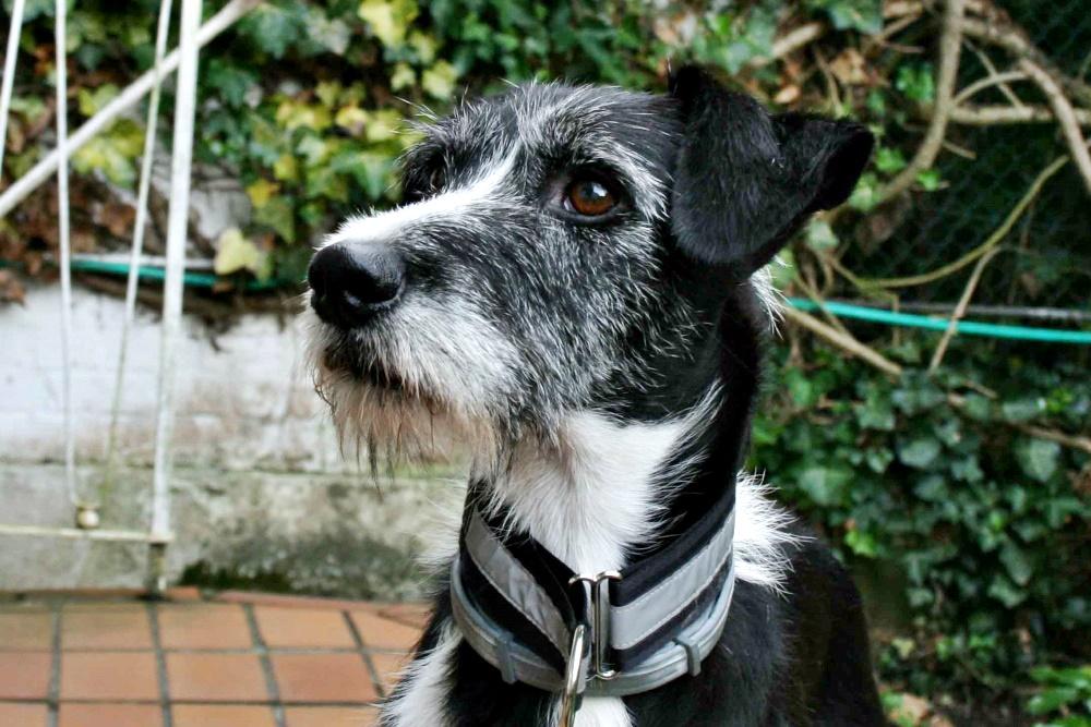 Toby, Mischling, Rüde, geb. 2011