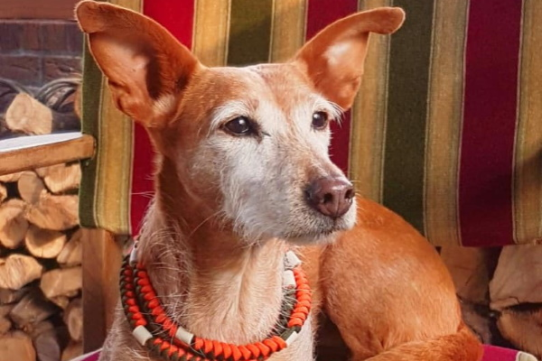"""Das witzige, etwas andere Hundewesen – eine kurze Geschichte von """"Sasa"""""""