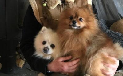 Zeus & Pluton
