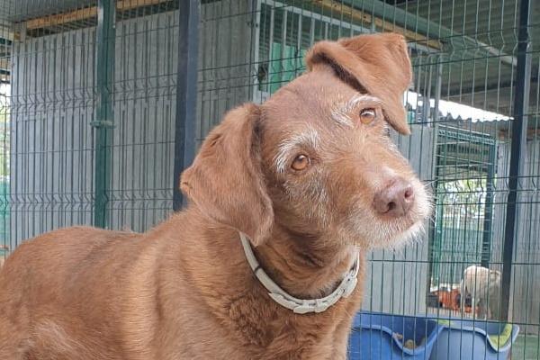 Lola ♀  Jagdhund – Tierheim PROA Madrid – Geboren 2010